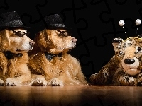 Golden retriever, Dwa, Psy, Maskotka