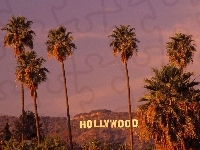 Hollywood, Kalifornia, Palmy